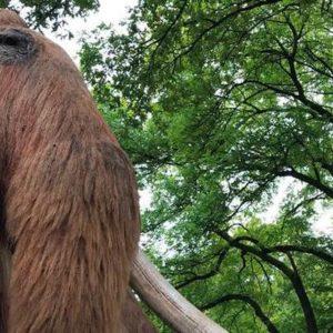 Udflugt til Givskud Zoo