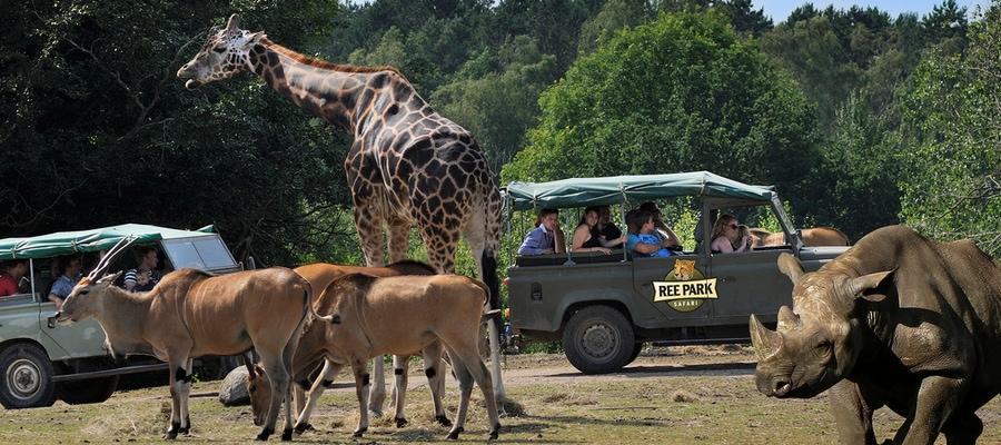 Tæt på dyrene i Ree Park