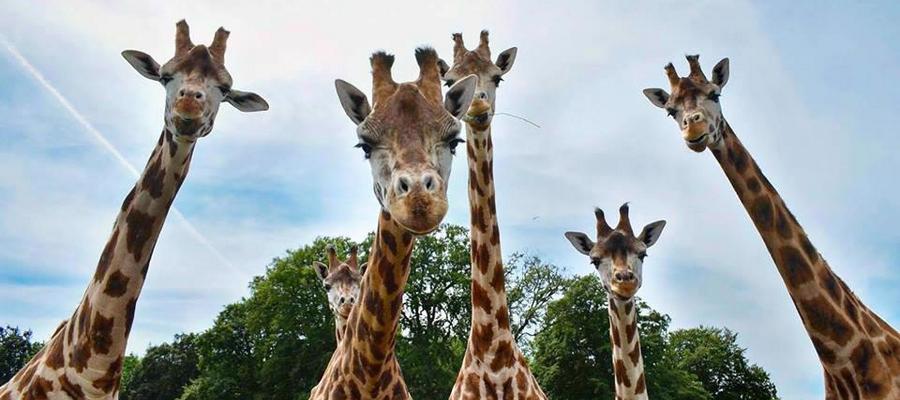 Knuthenborg Safaripark – en oplevelse vildere